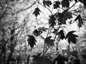 cc-by-sa Mylene Bressan