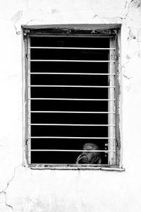 Own Prisoner