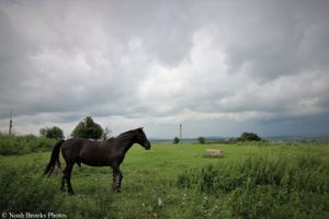 Horse in Western Ukraine