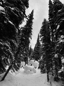 Glade, Revelstoke, British Columbia