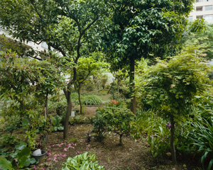 Aoyama Kitamachi Apaato Gardens #15