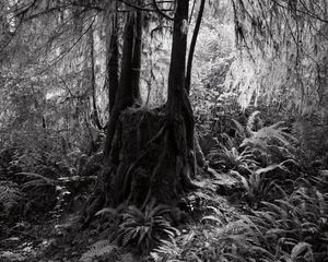 """From the series """"Redwood Saw"""""""