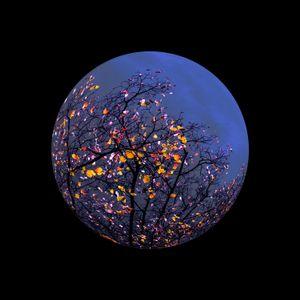 Azure Blue — Canopy