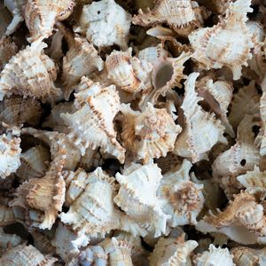 Obsessiveness: Seashells