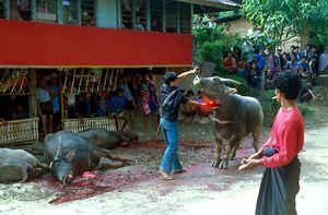 Funeral ceremony in Tana Toraja