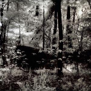 Wonderland Part 2, Great Falls Park, VA, 2008                                                                  © Kimberly Schneider