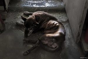 Sonja's dog Brindabella