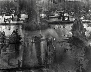Burned Cypress © Allison Barnes