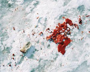 A dead seal still life