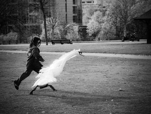 Dancing with the swan