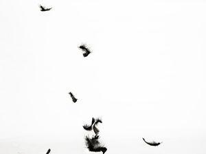 Aigle noir 2