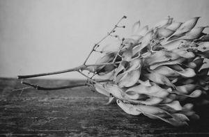 """""""Seed Pods"""" © Lisa Blair"""