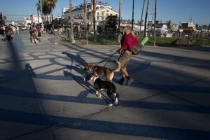 Venice beach Boardwalk, dog, a lot of dogs.