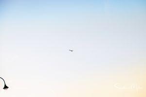 Horizon(vi)tal11