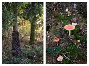 Homage to Meret Oppenheim & poisonous mushrooms
