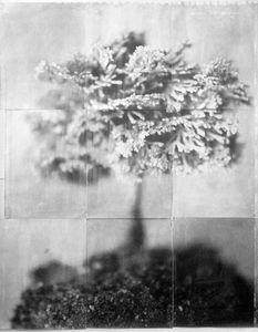 Bonsai (Atomic)