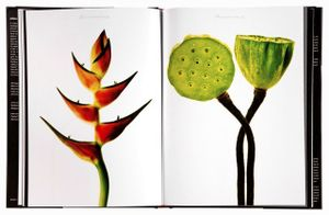Spread 35-35, Giant Loster Claw (Heliconia bihai - cultivar), Sacred Lotus Pods (Nelumbo nucifera) From the book,  joSon Intimate Portraits of Nature