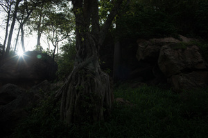 Many of the young people who were abducted have been relocated. In their new homes, they slept under trees and in terrain like this image.