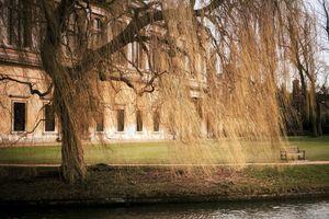Pictures of Cambridge #5