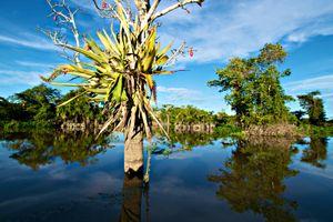 Amazon Landscape - © Adel Korkor