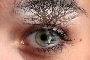 Through my eyes 8
