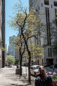A Young Tree in Chicago in Spring