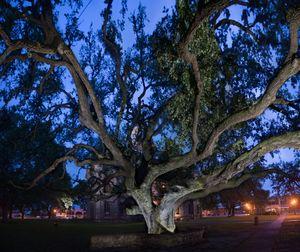Hanging Tree; Goliad, Texas 2018