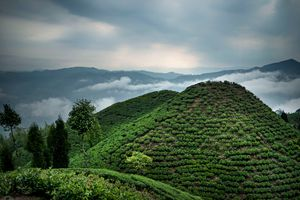 The tea above the clouds.