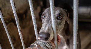 All They Ever Wanted Was Love. The Canidrome, Macau, China.