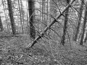 Wounded Woods 12