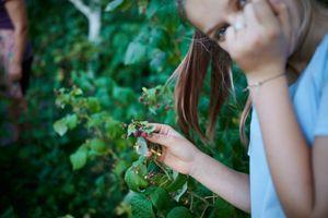 Sophia, foraging wild berries