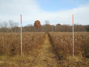 Orange Posts at Vassar Farm
