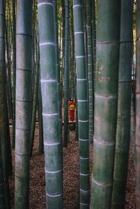 Girl In Bamboo Forrest