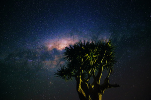 Peeping behind/The Milky Way peeping behind a big Kokerboom (Aloe dichotoma) in the Augrabies Falls National Park, South Africa.