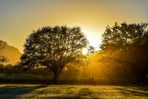 Golden Mornings