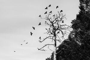 Raven shelter