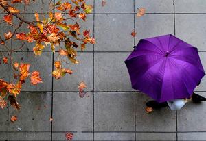 Leaves and umbrella