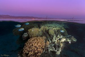 Sunset on the coral reefs of Eilat, Red Sea