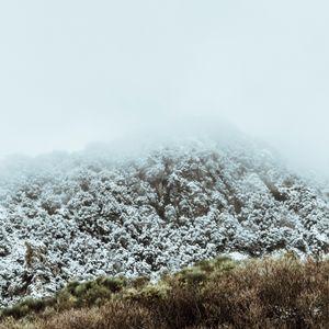 Trasposizione D'Inverno 2