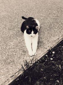 Stray Cat 17