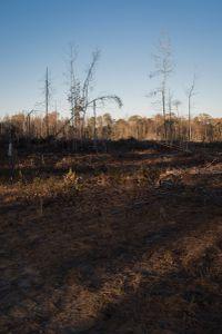 Dixon Mills, Alabama