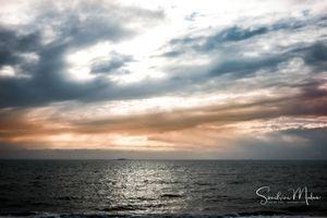Ocean life19