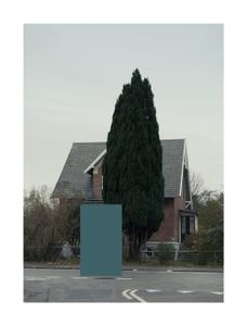 House with pine