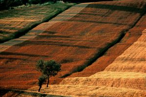 Champes Italie, Portraits of Trees