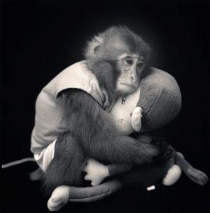 Big with Monkey Doll, Suo Sarumawashi