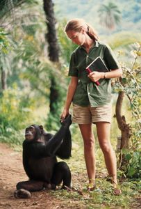 A chimp clasps hands with zoologist Jane Goodall, 1965 © Hugo van Lawick, National Geographic