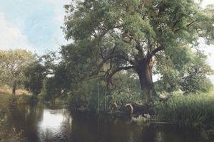 Memories of trees .3