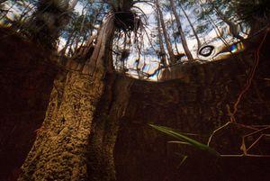 Big Cypress at Big Cypress