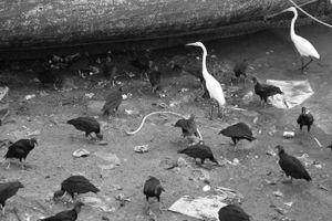 Birds- Black & White