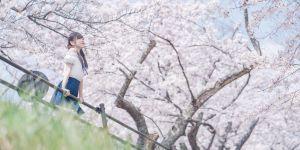 桜の季節が来たね